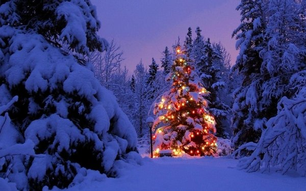 Holiday Christmas Christmas Tree Evening Christmas Lights HD Wallpaper | Background Image