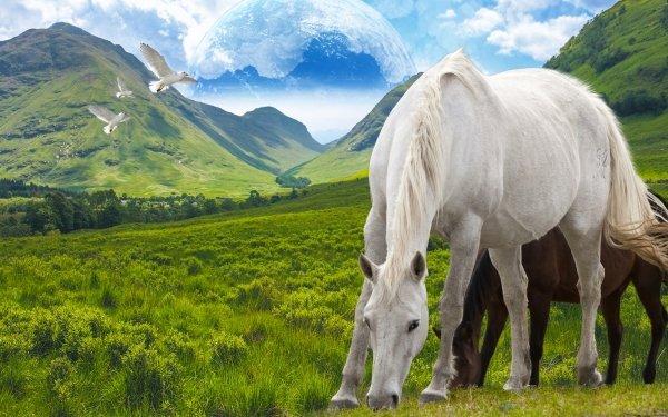 Animal Horse Fantasy Landscape Mountain Bird Digital Art Artistic HD Wallpaper | Background Image