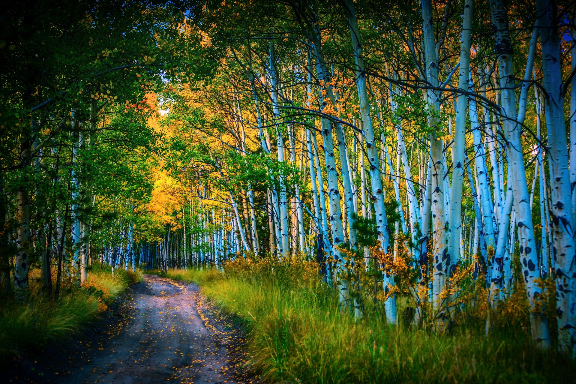 Path in Birch Forest Full HD Wallpaper and Background  2048x1365  ID:674034