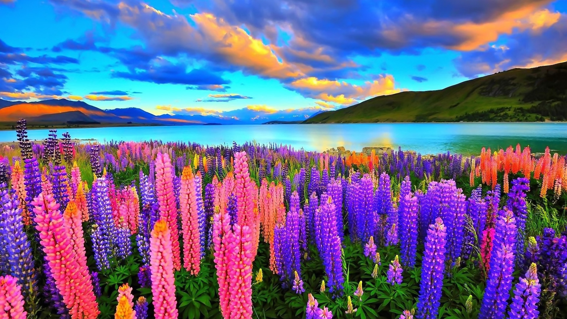 Lupines On The Lake Computer Wallpapers Desktop