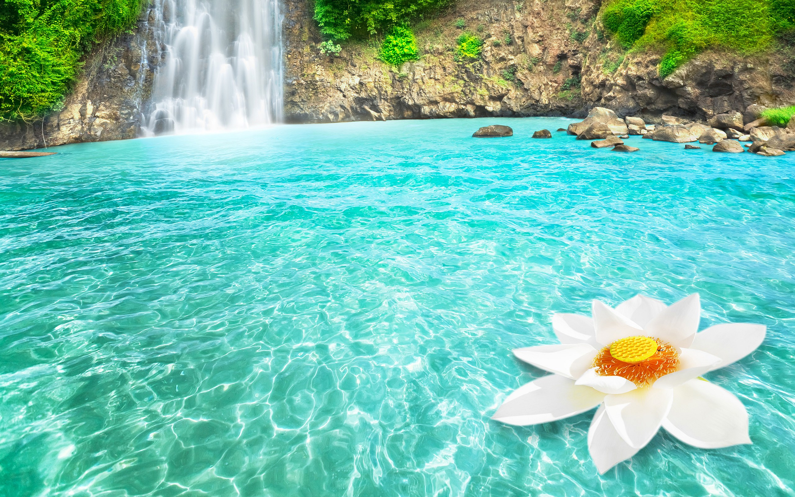 Tropical Waterfall And White Lotus Full HD Wallpaper Background