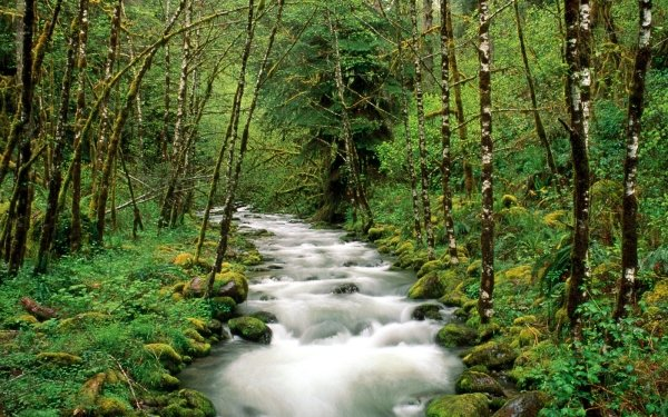 Earth Stream Forest Tree Green Oregon Nature HD Wallpaper   Background Image