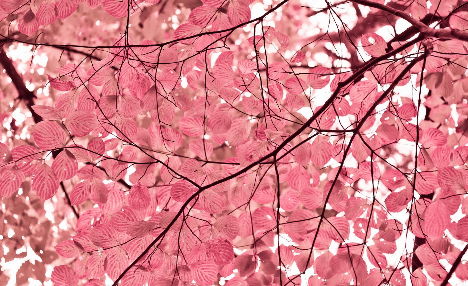 Fondos De Patalla: Pink Leaves Fondo De Pantalla HD