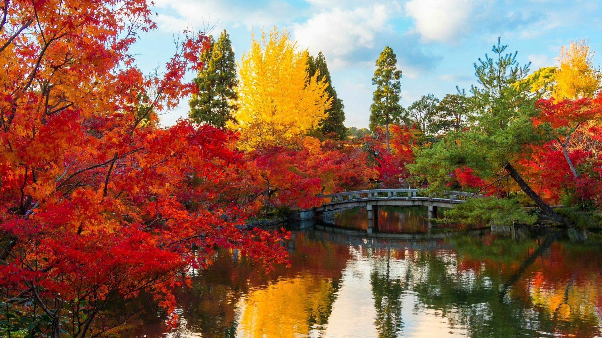 autumn park wallpaper 1920x1080 - photo #16