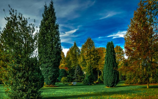 Photography Park Man Made Tree Green Grass HD Wallpaper   Background Image