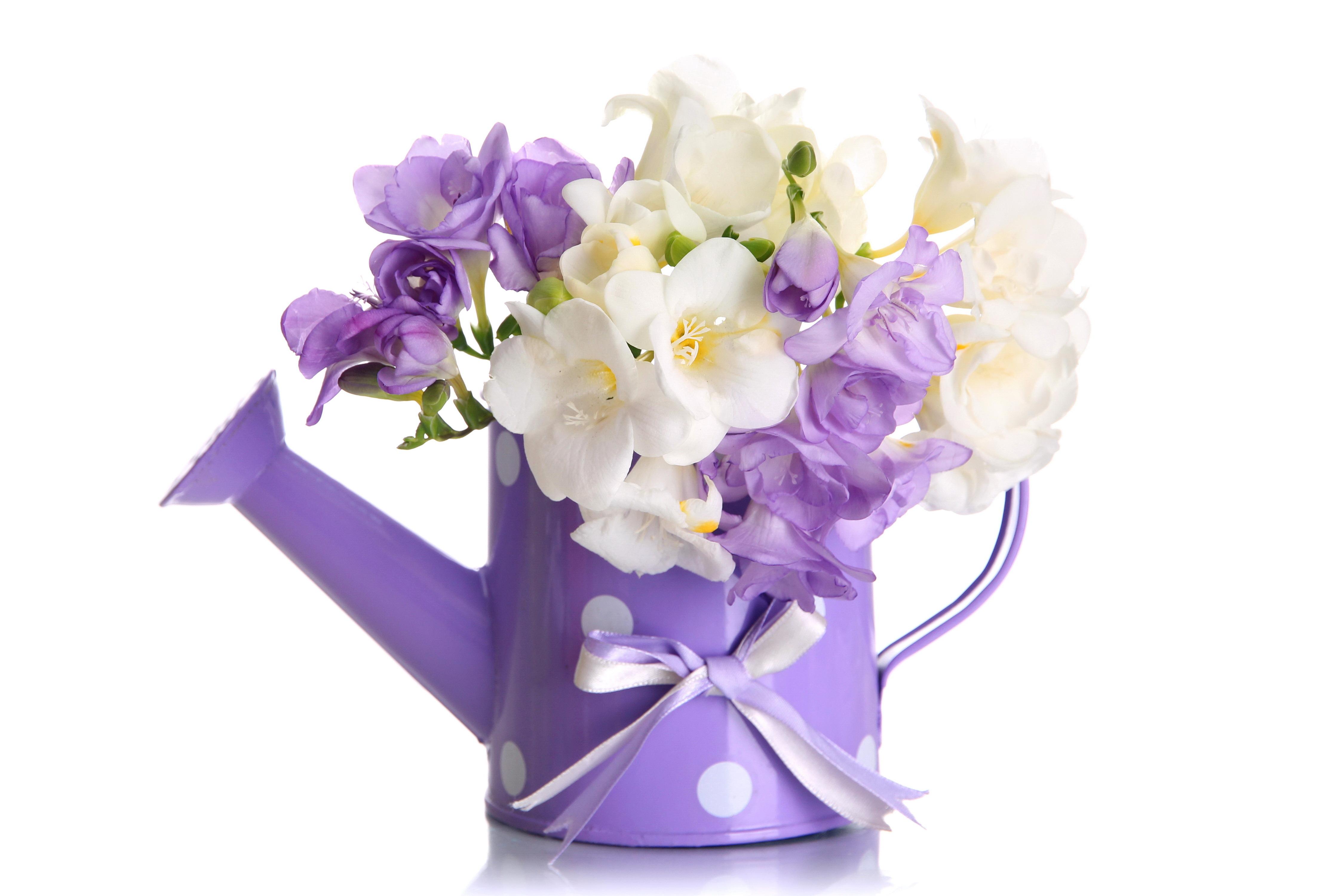 Purple and white flowers in water can 4k ultra hd wallpaper violet white flower bakgrundsbilder id687837 mightylinksfo