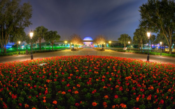 Photography Park Man Made Paris Flower Night Red Flower Orange Flower HD Wallpaper   Background Image