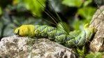Preview Caterpillar