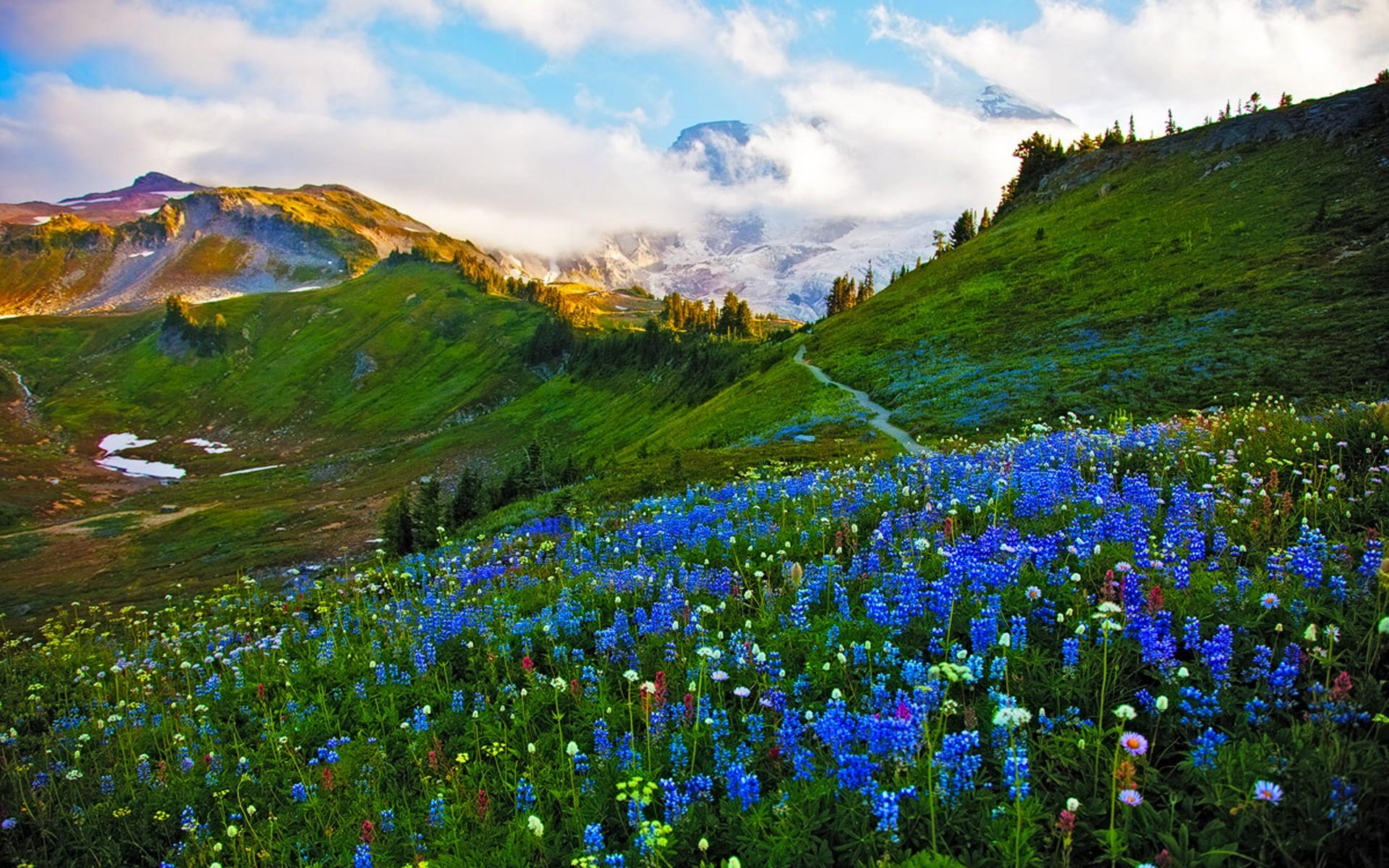 Mountain Landscape in Spring Fond d'écran HD | Arrière-Plan | 1920x1200 | ID:690099 - Wallpaper ...