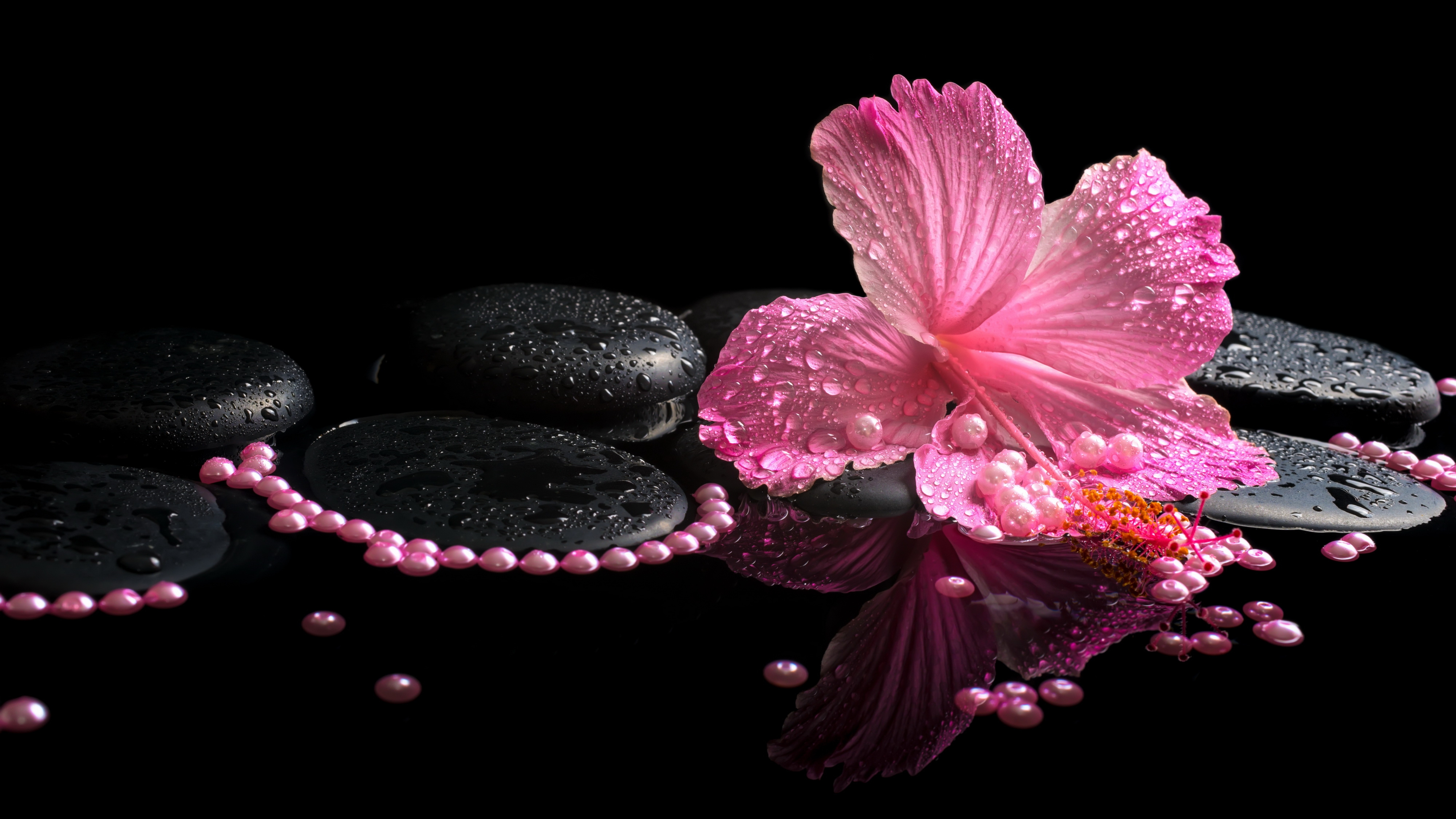 64 hibiscus hd wallpapers | background images - wallpaper abyss