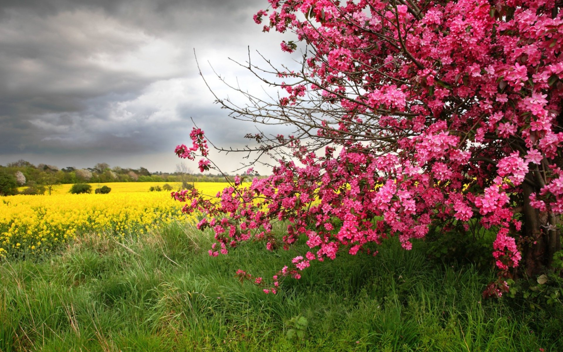 Earth - Spring  Earth Field Bush Blossom Yellow Flower Pink Flower Wallpaper