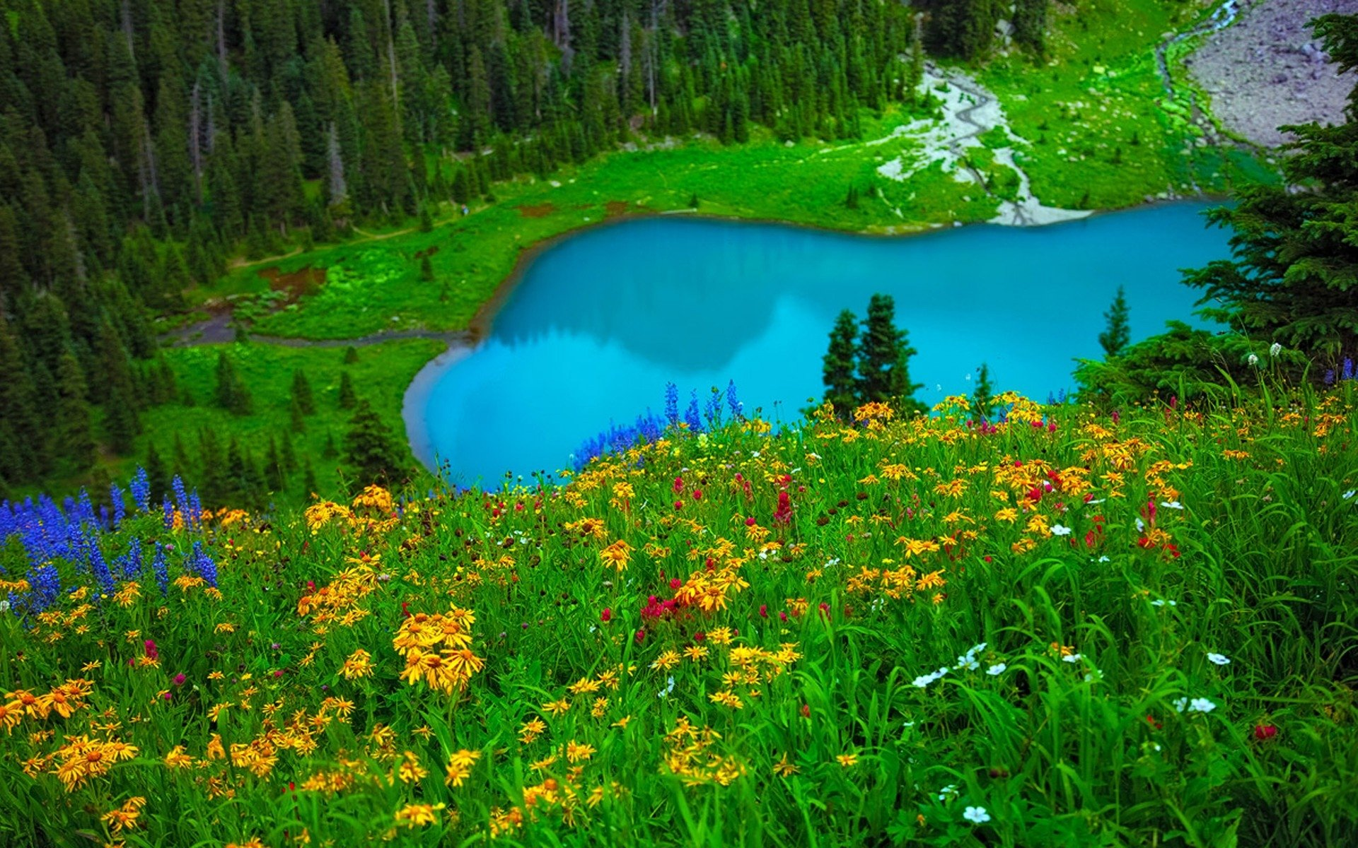 Earth - Spring  Earth Lake Turquoise Flower Grass Colors Landscape Wallpaper