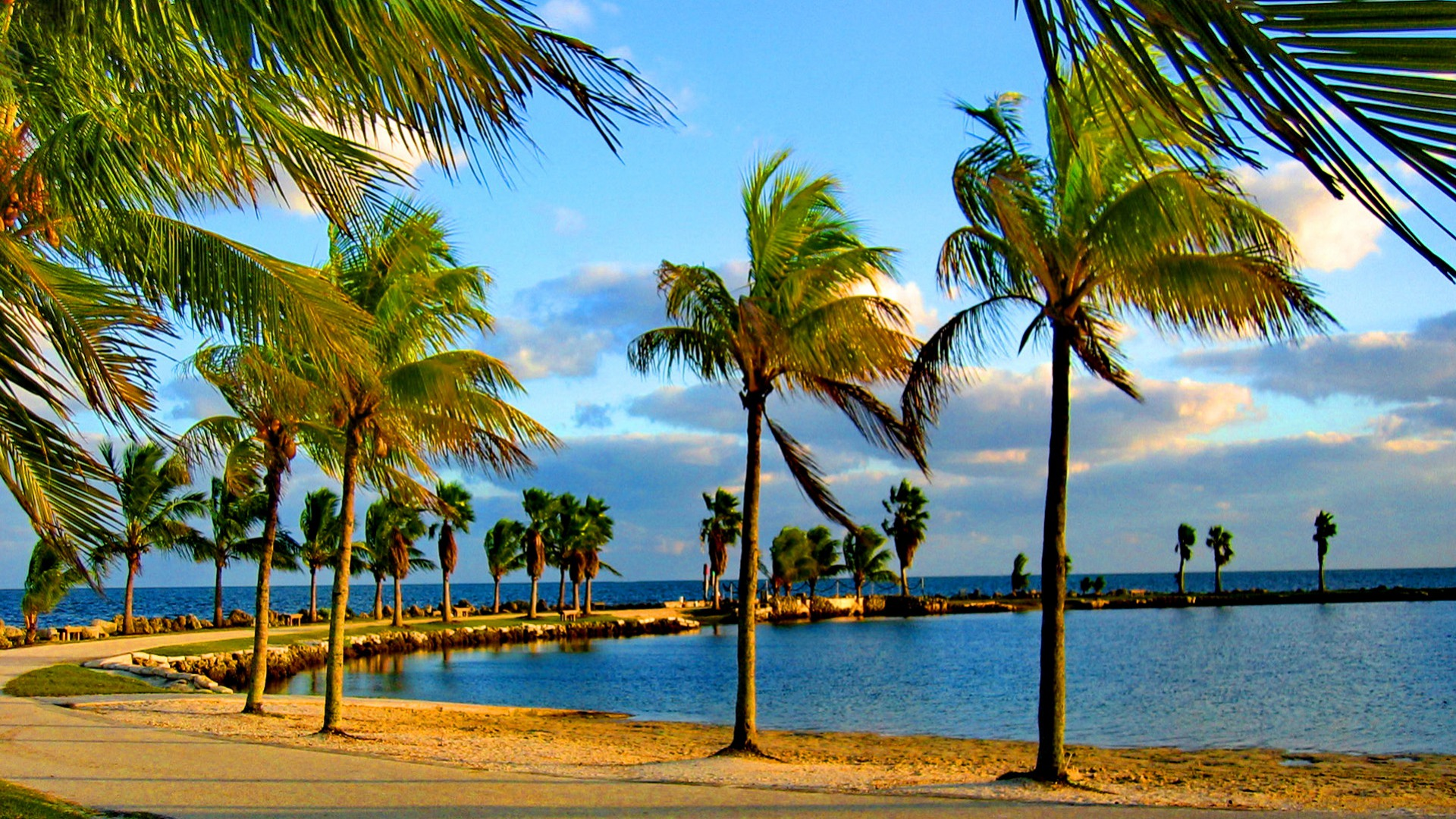 Palm Trees on a Windy Day HD Wallpaper   Background Image ...