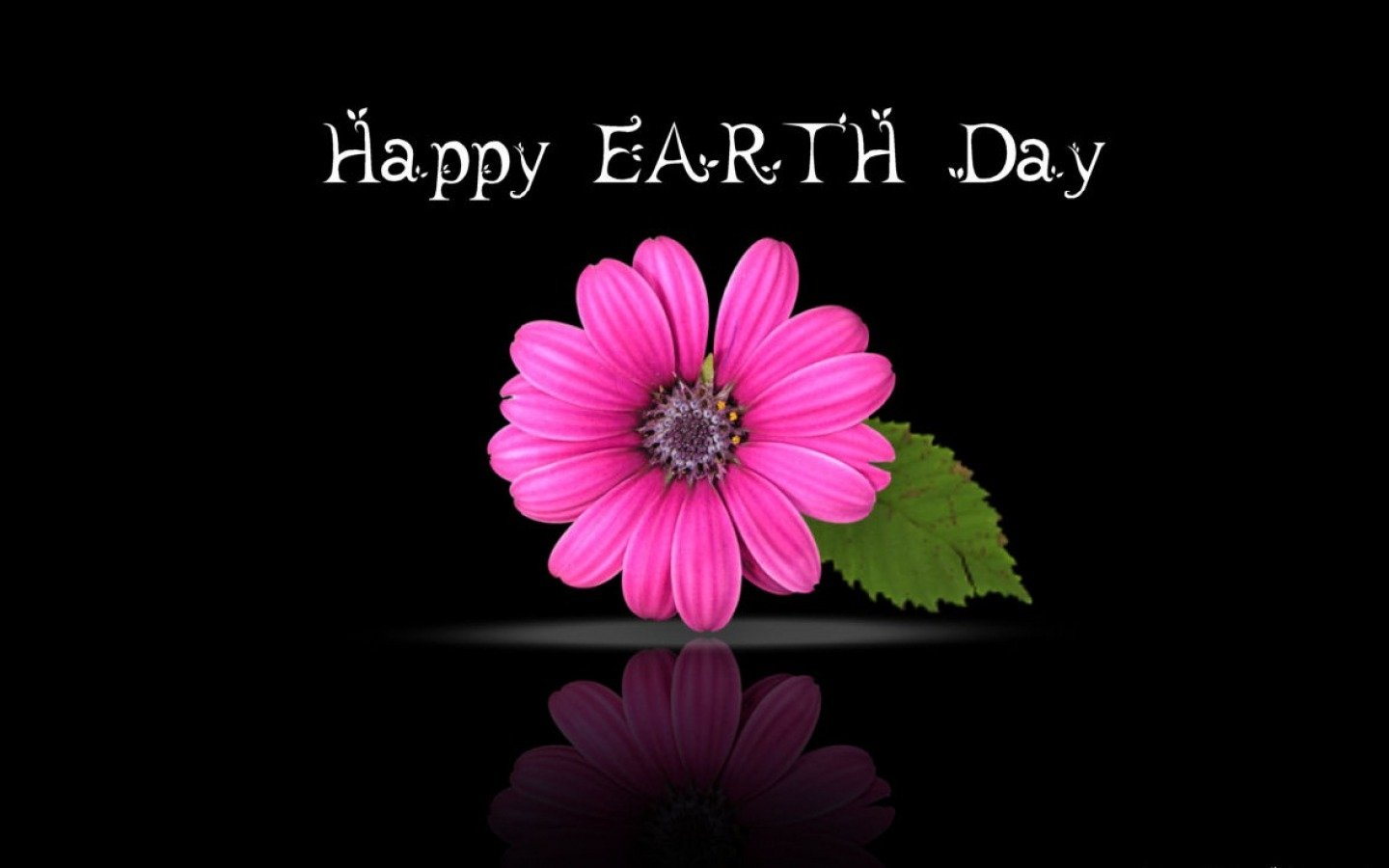 Holiday - Earth Day  Pink Flower Holiday Wallpaper