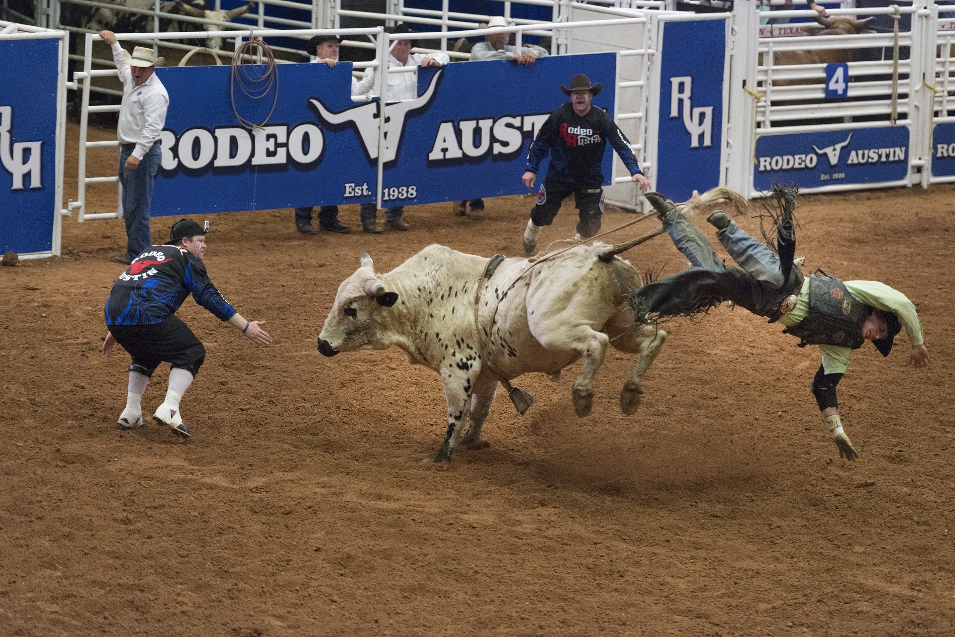 thrown off a bucking bull in a rodeo computer wallpapers
