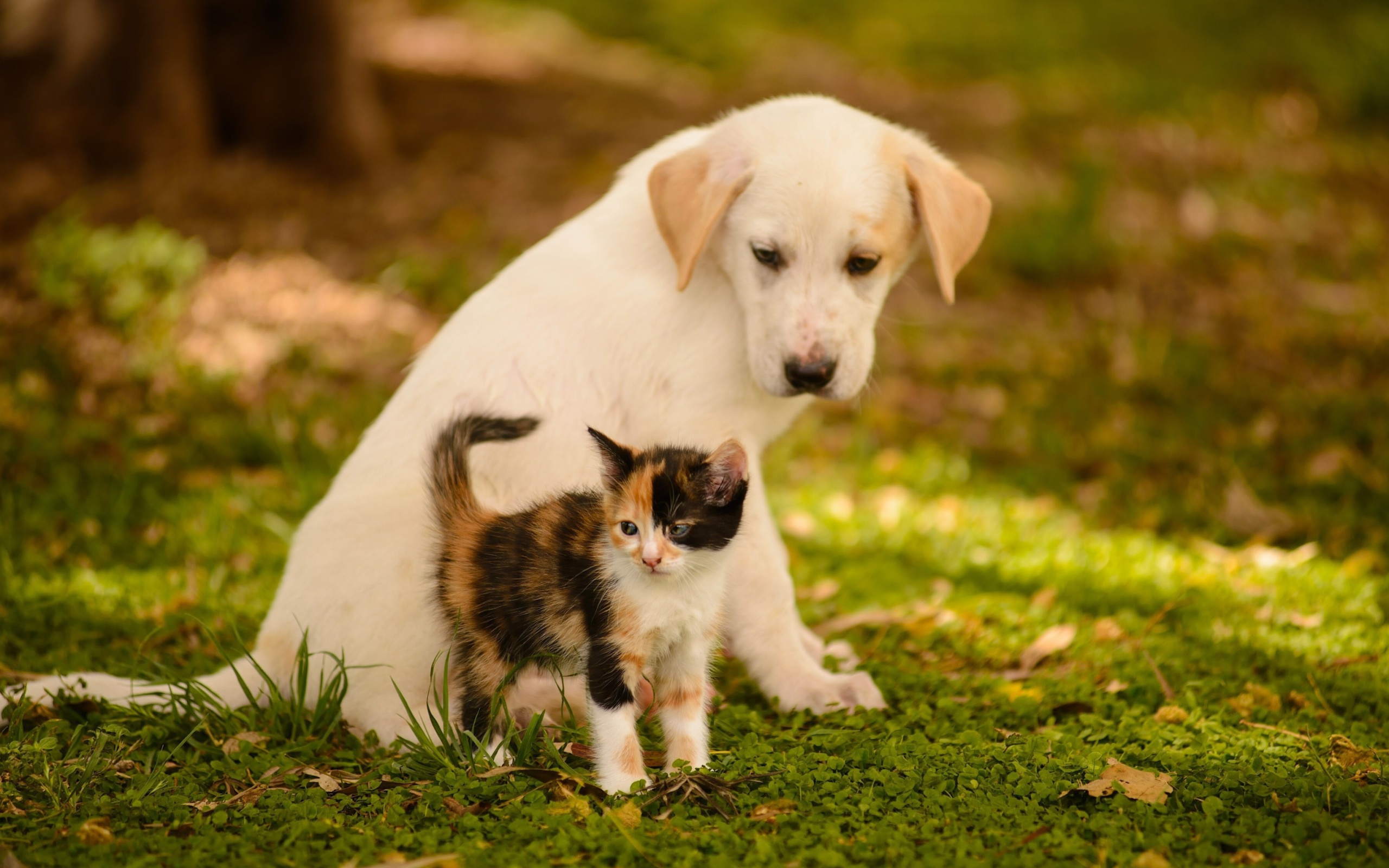 Kitten And Puppy Hd Wallpaper Background Image 2560x1600