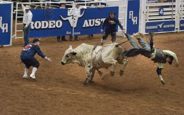 Sports Rodeo Cowboy Bull HD Wallpaper | Background Image