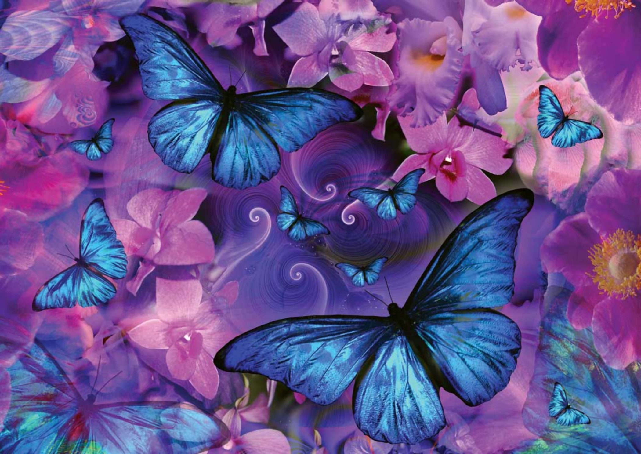 Butterflies and Flowers HD Wallpaper   Background Image ...