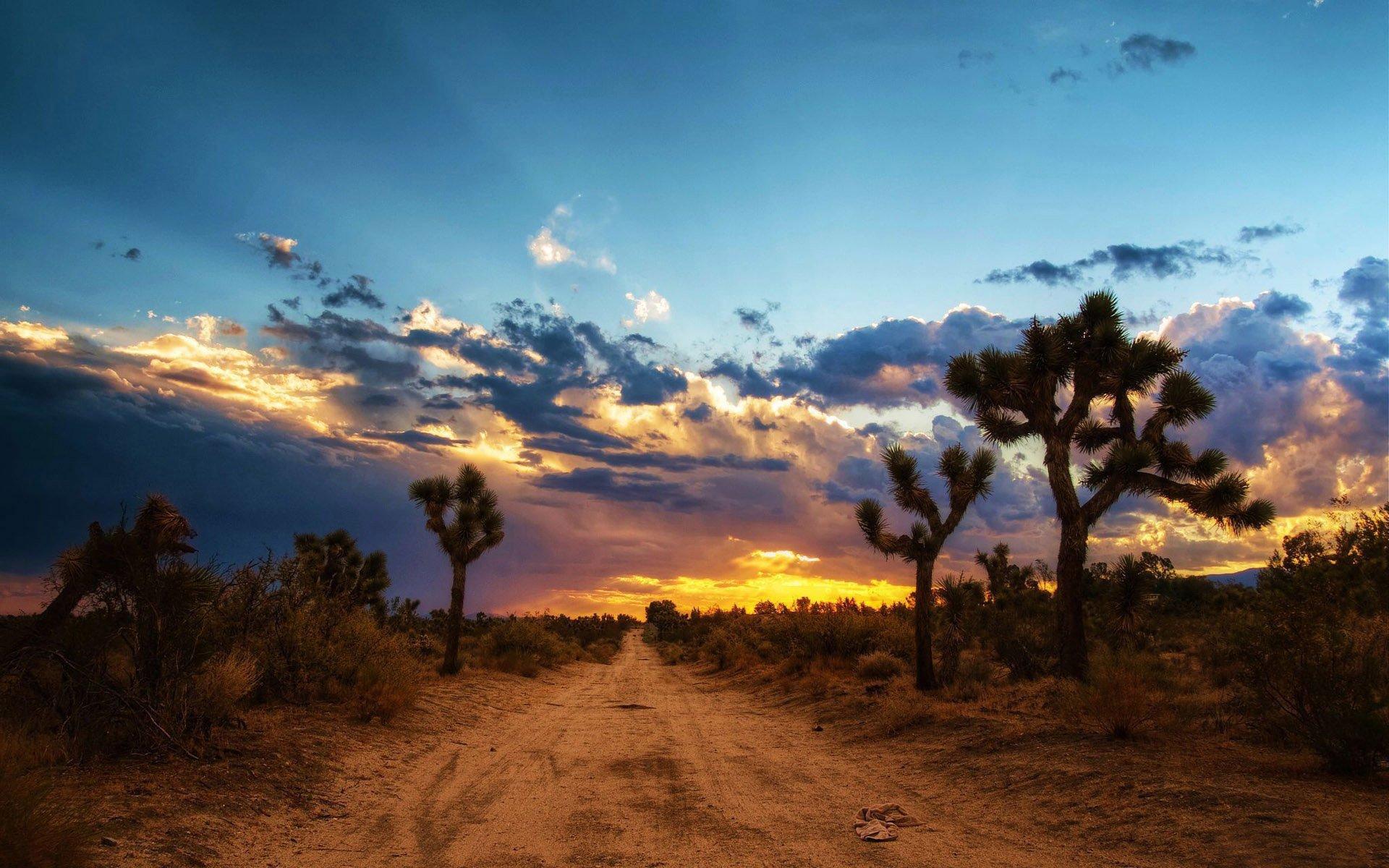 desert wallpaper cactus hd - photo #31