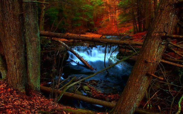 Earth Waterfall Waterfalls Creek Stream Fall Foliage Tree Forest HD Wallpaper | Background Image