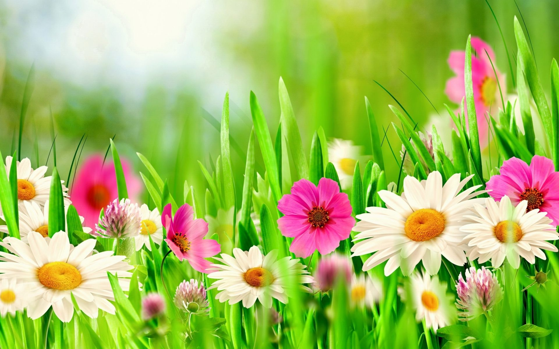 Spring Flowers Full HD Wallpaper and Background Image | 1920x1200 ... for Green And Pink Flower Wallpaper  155fiz