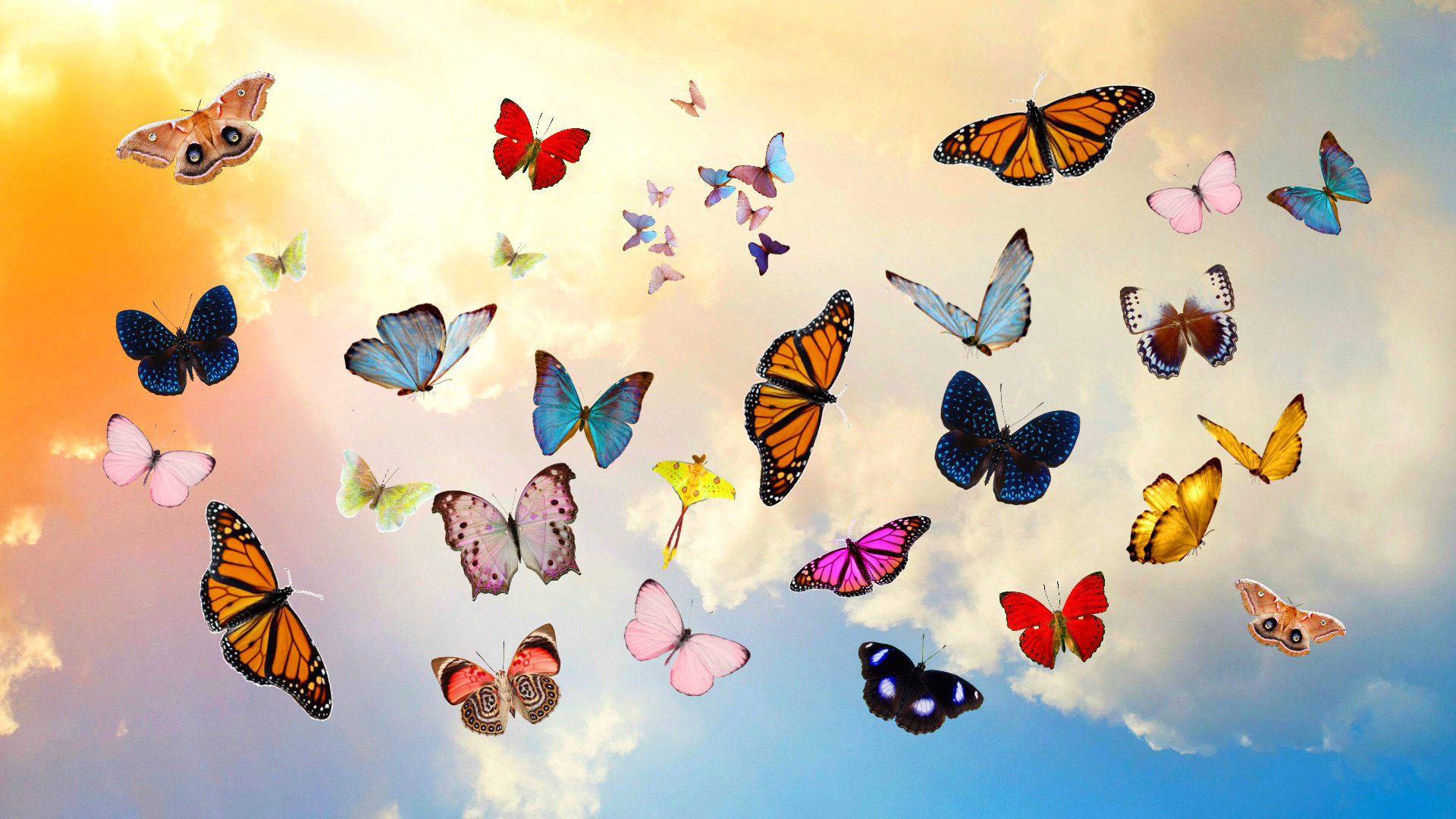Colorful Butterflies Hd Wallpaper Background Image 1920x1080