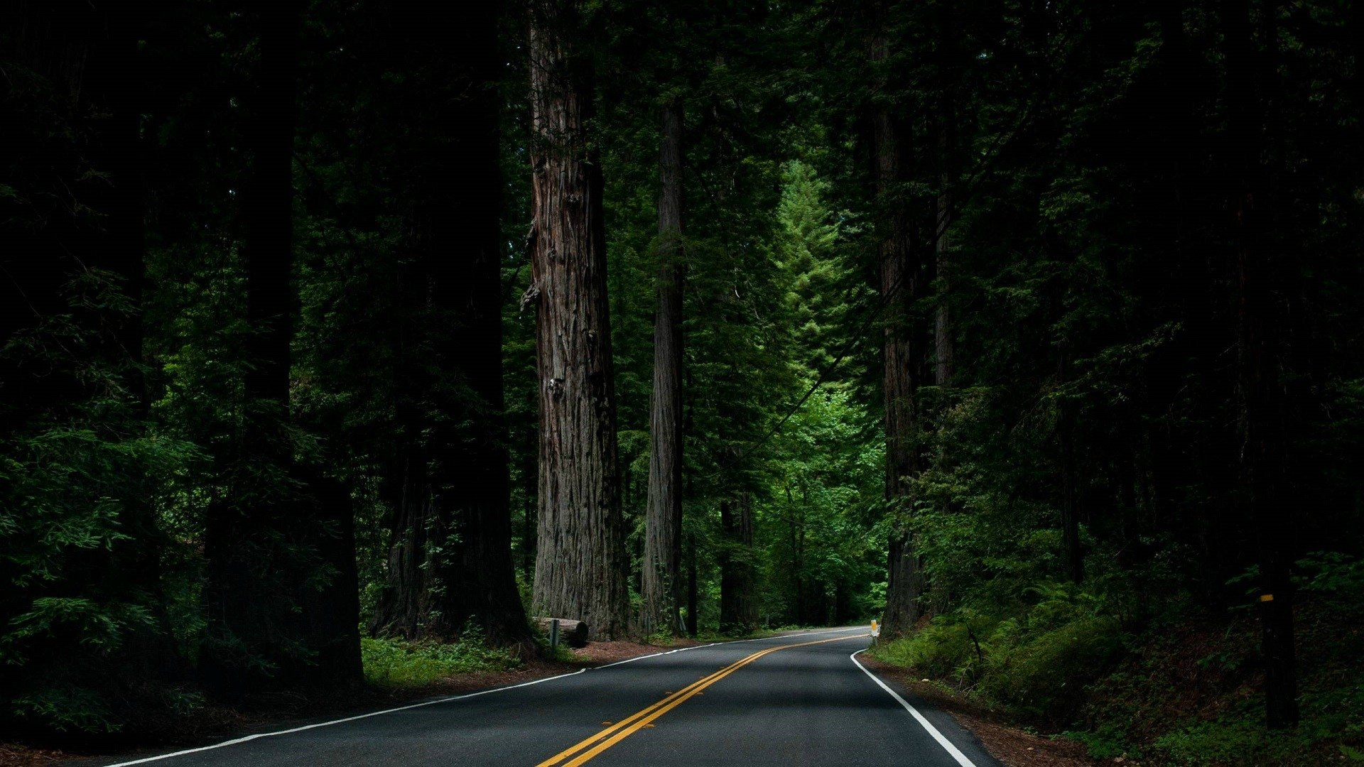 Dark Forest Road Papel De Parede Hd Plano De Fundo 1920x1080 Id 705124 Wallpaper Abyss