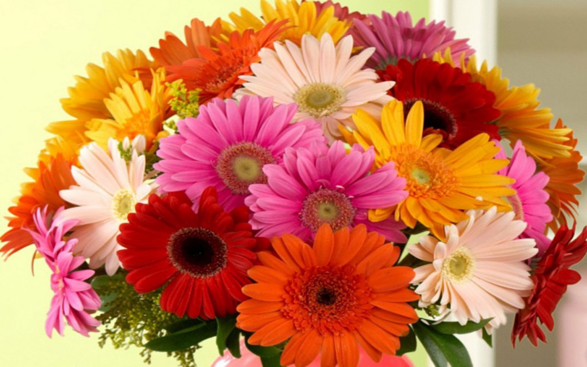 Gerbera bouquet full hd wallpaper and background image 1920x1200 man made flower bouquet gerbera colorful red flower yellow flower white flower pink flower wallpaper izmirmasajfo Image collections