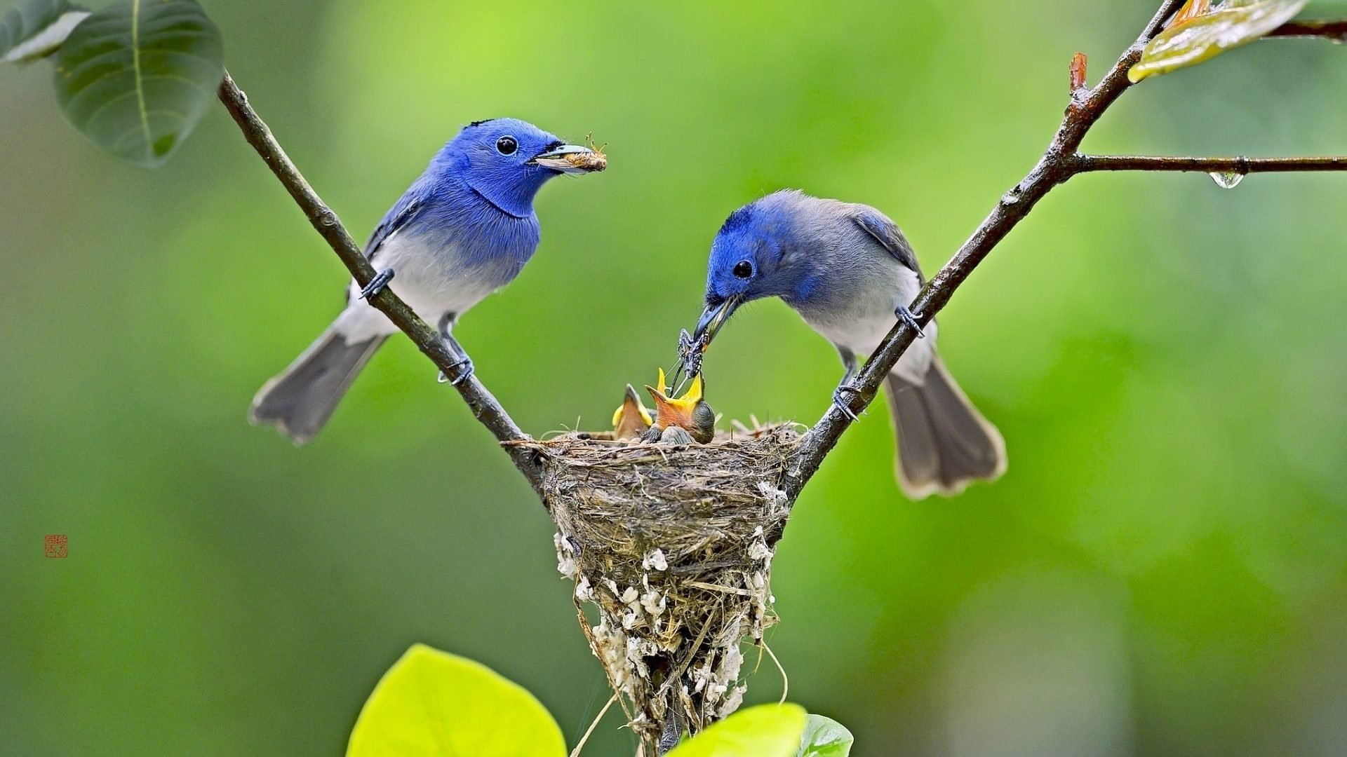 Birds Feeding Their Babies HD Wallpaper
