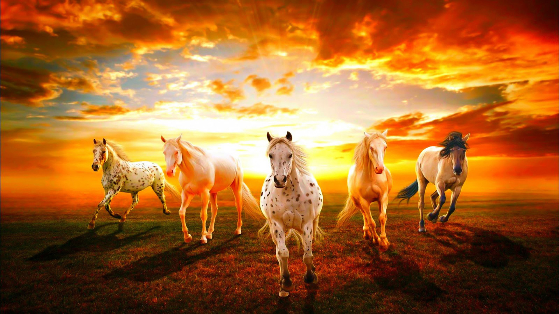 a group of wild horses racing at sunset