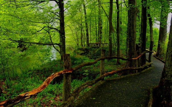 Man Made Path Forest Tree Green Fence Boardwalk HD Wallpaper | Background Image