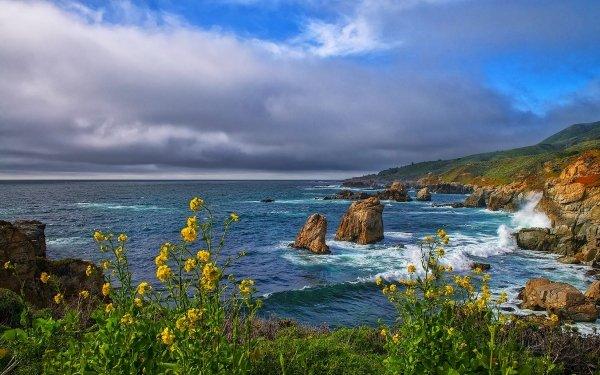 Earth Coastline Ocean Sea Rock Flower Horizon HD Wallpaper | Background Image
