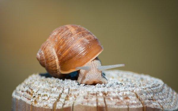 Animal Snail Shell Close-Up Mollusc HD Wallpaper | Background Image