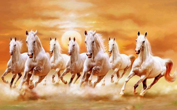 Animaux Cheval Coucher de Soleil Fond d'écran HD | Image