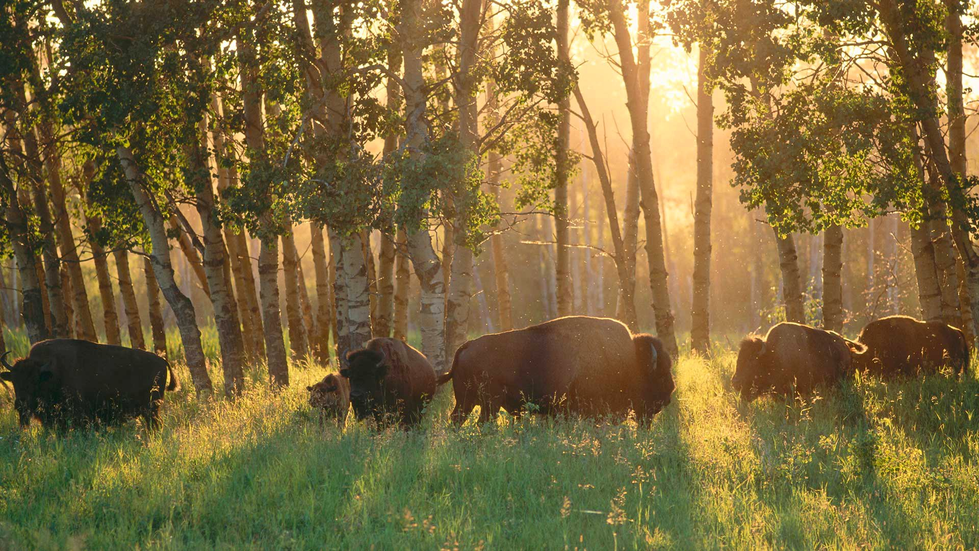 Elk Island National Park HD Wallpaper | Background Image ...