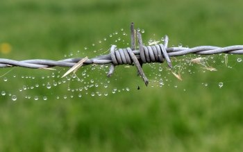 Hd Wire | 23 Barb Wire Hd Wallpapers Hintergrunde Wallpaper Abyss