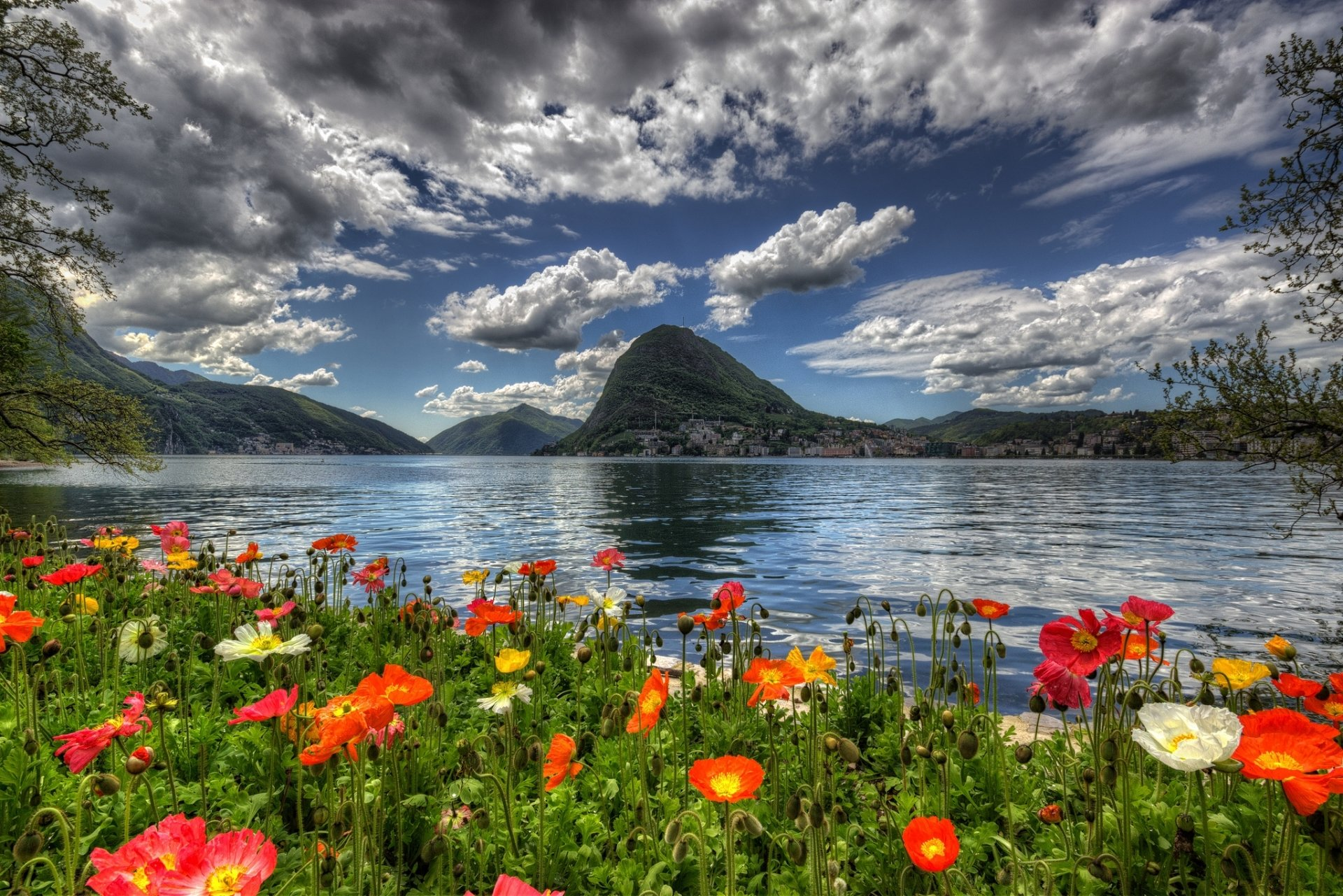 flowers by lake in switzerland hd wallpaper background