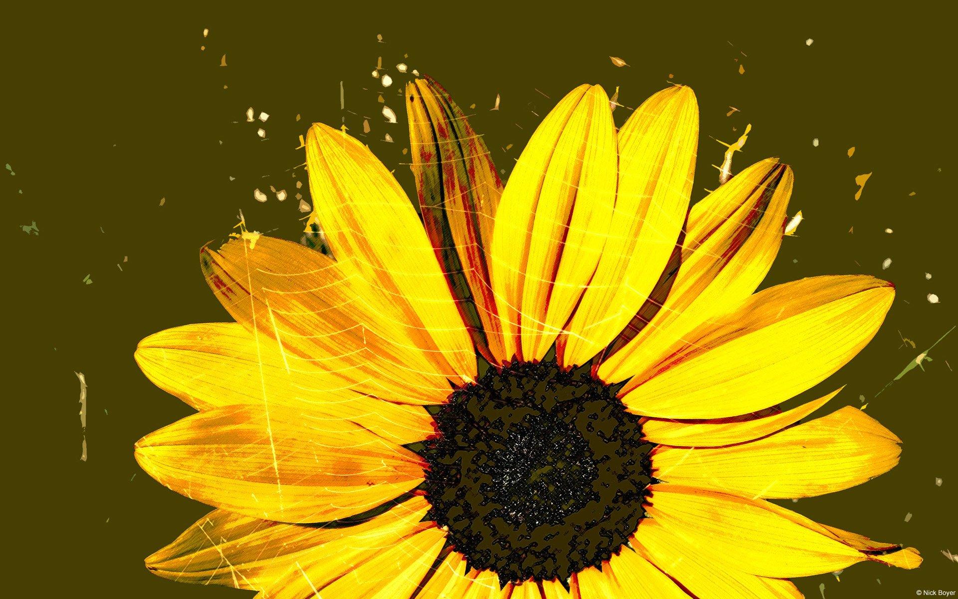 Artsy Sunflower Desktop Wallpaper