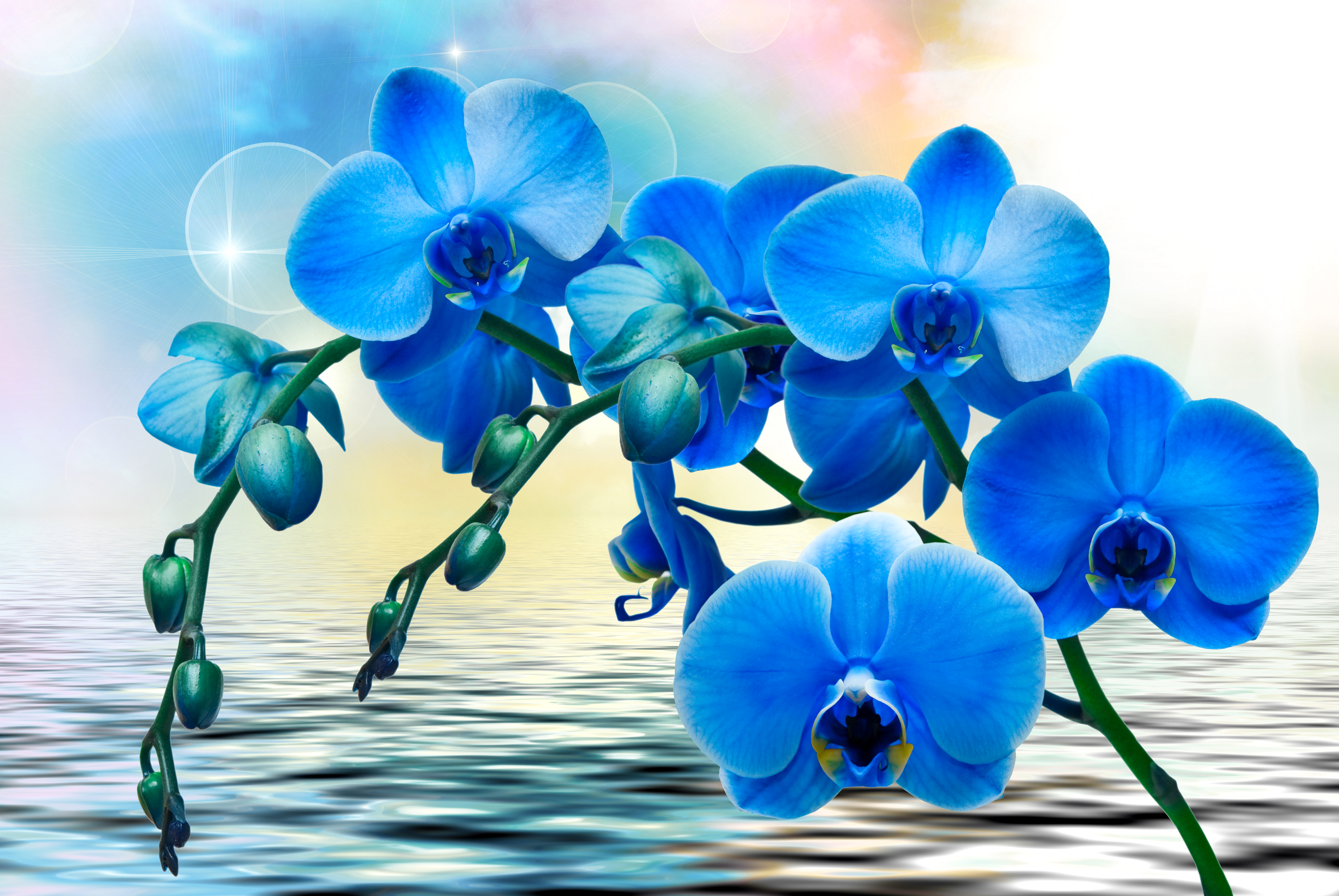 Orchid Water Wallpapers ID732177