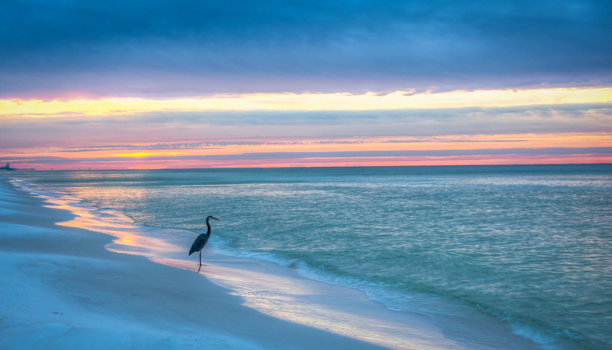 Heron On Florida Gulf Coast Beach HD Wallpaper