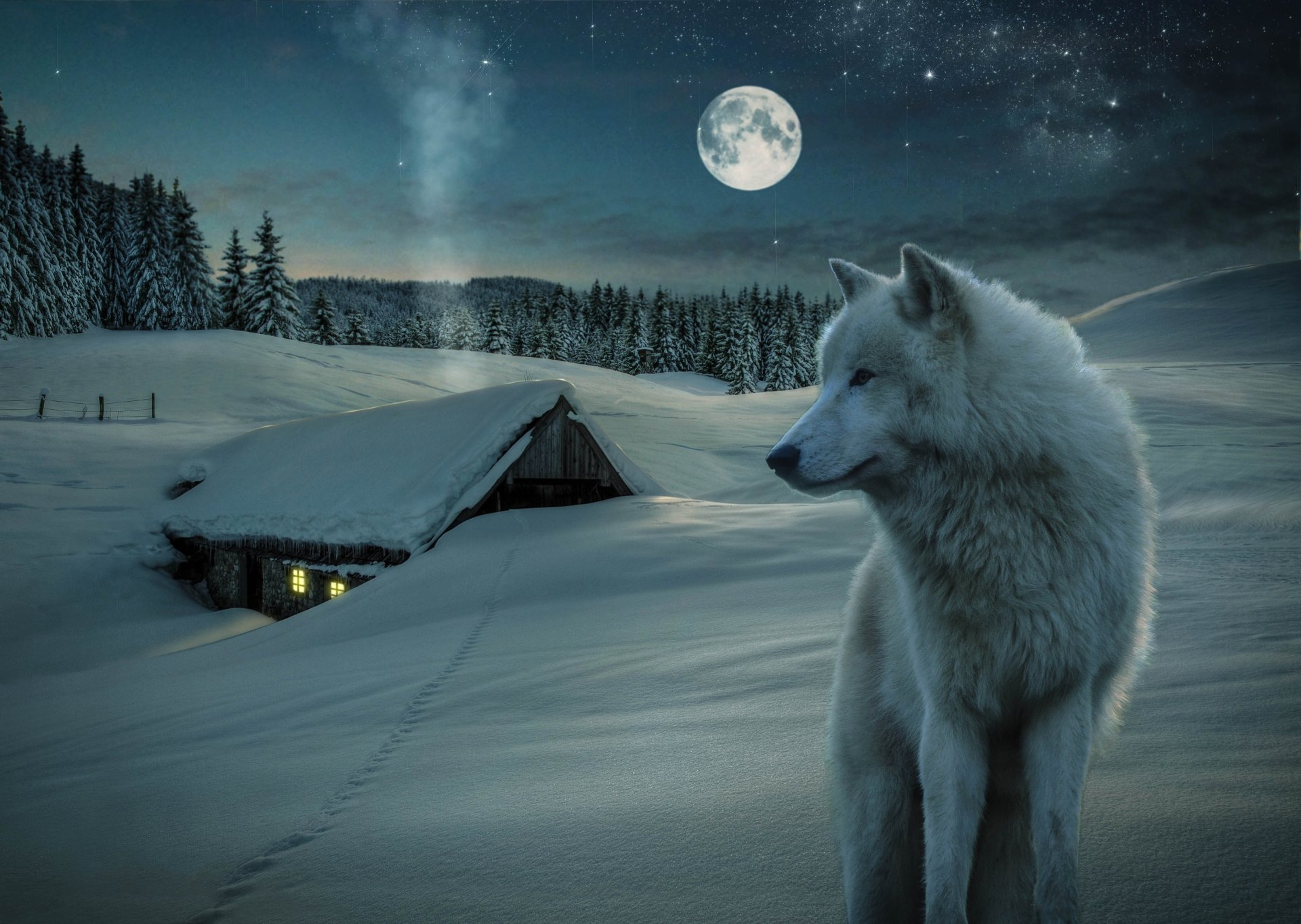 Animal - Wolf  Animal White Wolf Winter Snow House Stars Starry Sky Moon Night Wallpaper