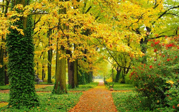 Photography Park Fall Foliage Path Bench HD Wallpaper | Background Image