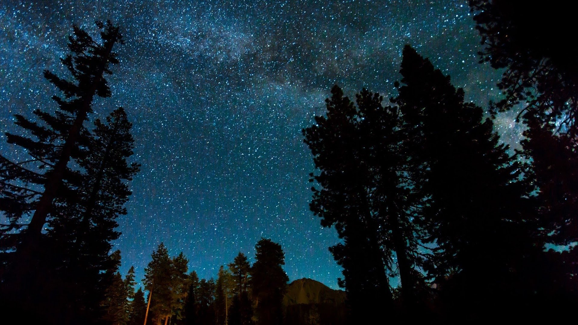 Starry Sky Over Night Forest Hd Wallpaper Background Image