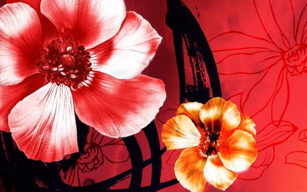 Artistic Flower Flowers Anemone Orange Flower Pink Flower HD Wallpaper   Background Image