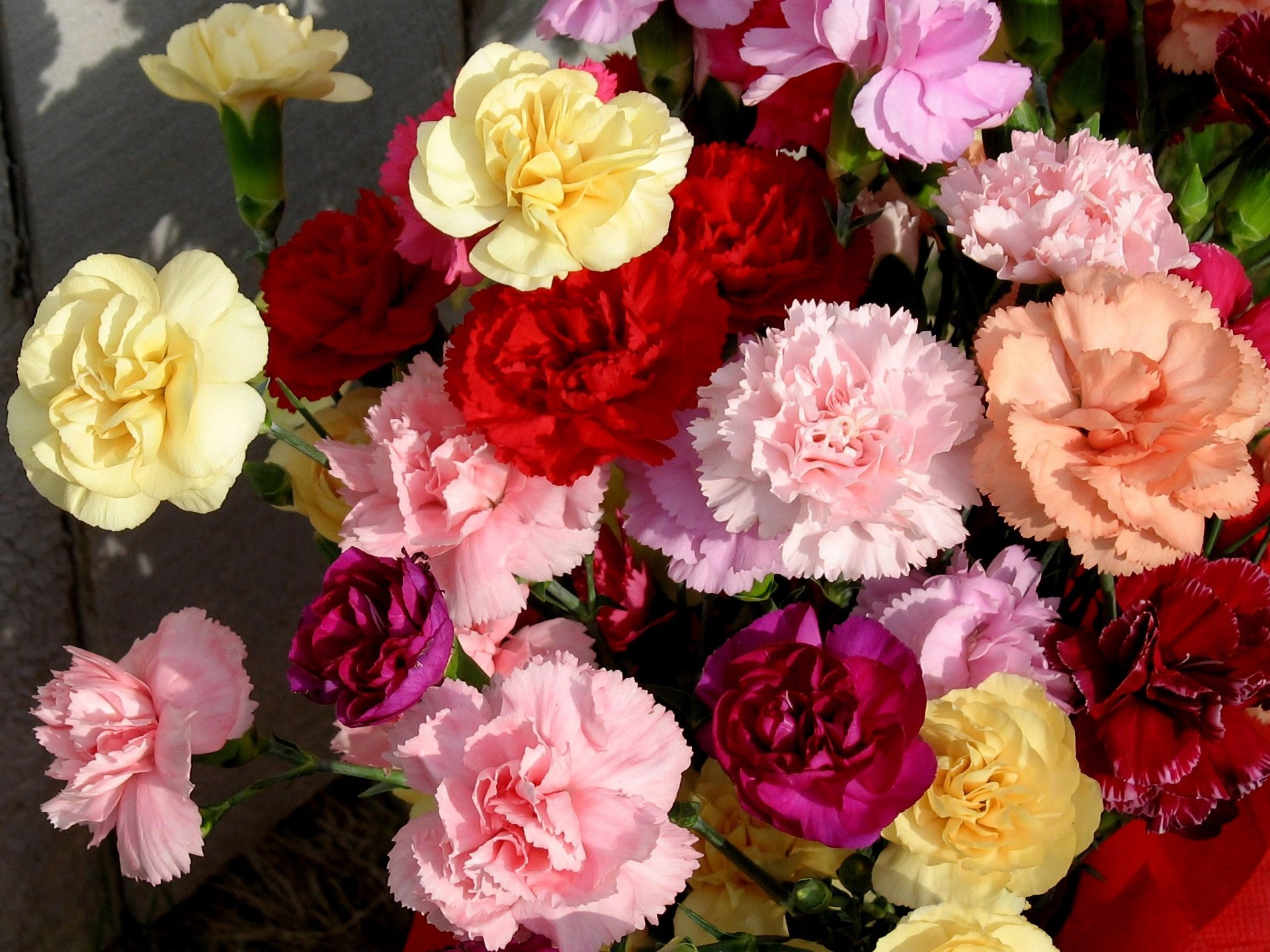 Colorful Carnations Full HD Wallpaper and Background Image ...