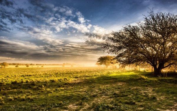 Earth Landscape Nature Horizon Grass Tree Sky Cloud Sunbeam HD Wallpaper | Background Image