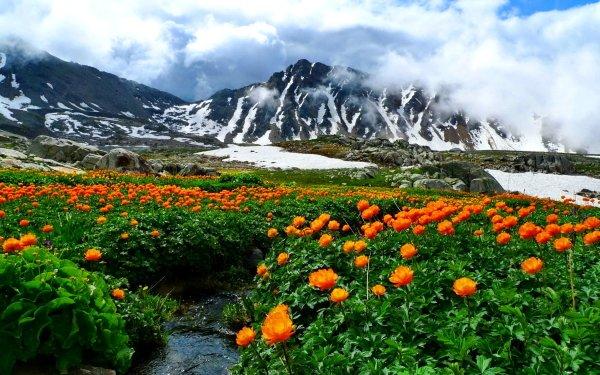 Earth Landscape Mountain Flower Cloud Orange Flower HD Wallpaper | Background Image