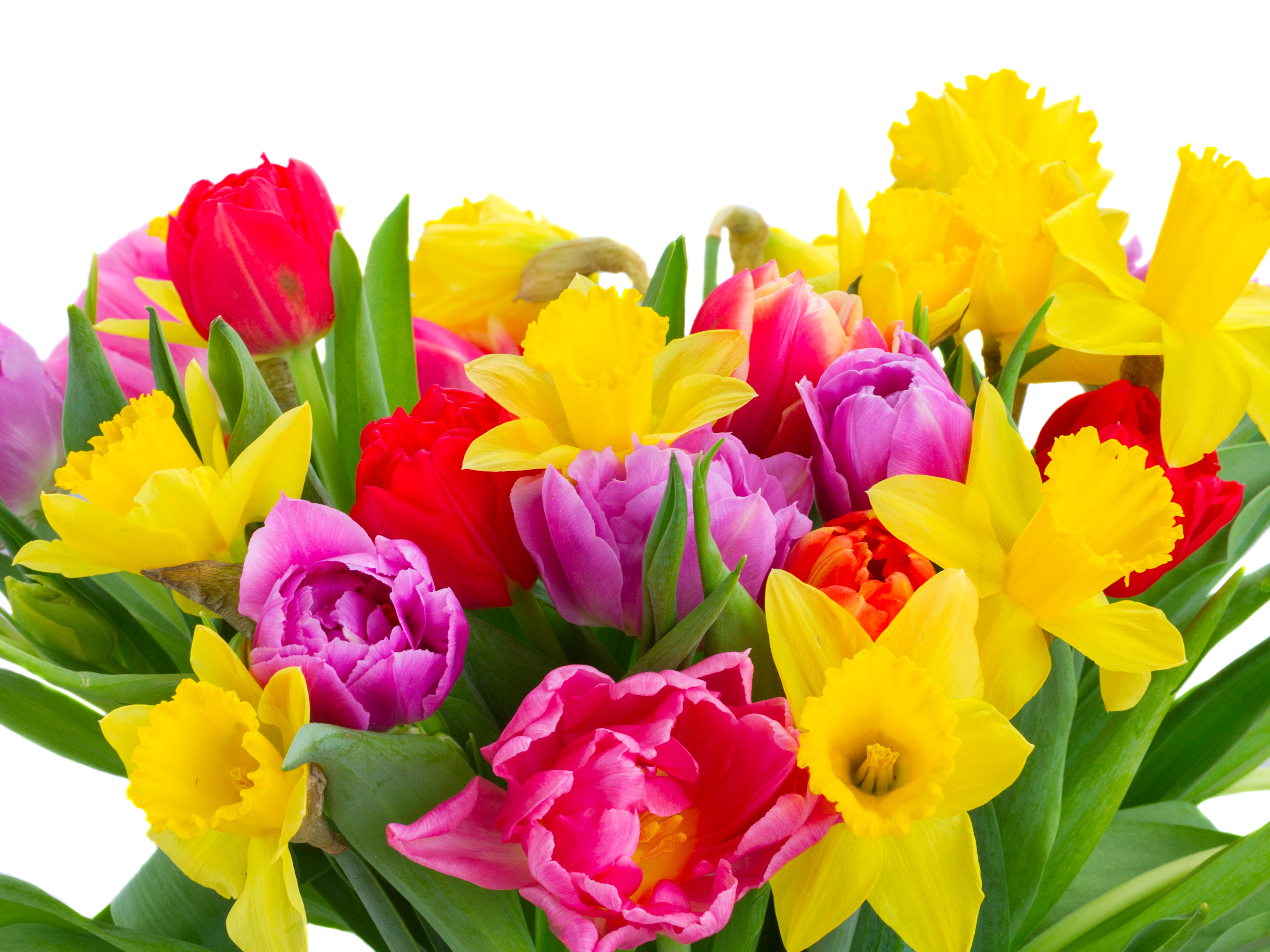 Flower 5k retina ultra hd wallpaper and background image 6000x4500 man made flower bouquet tulip daffodil yellow flower pink flower wallpaper izmirmasajfo