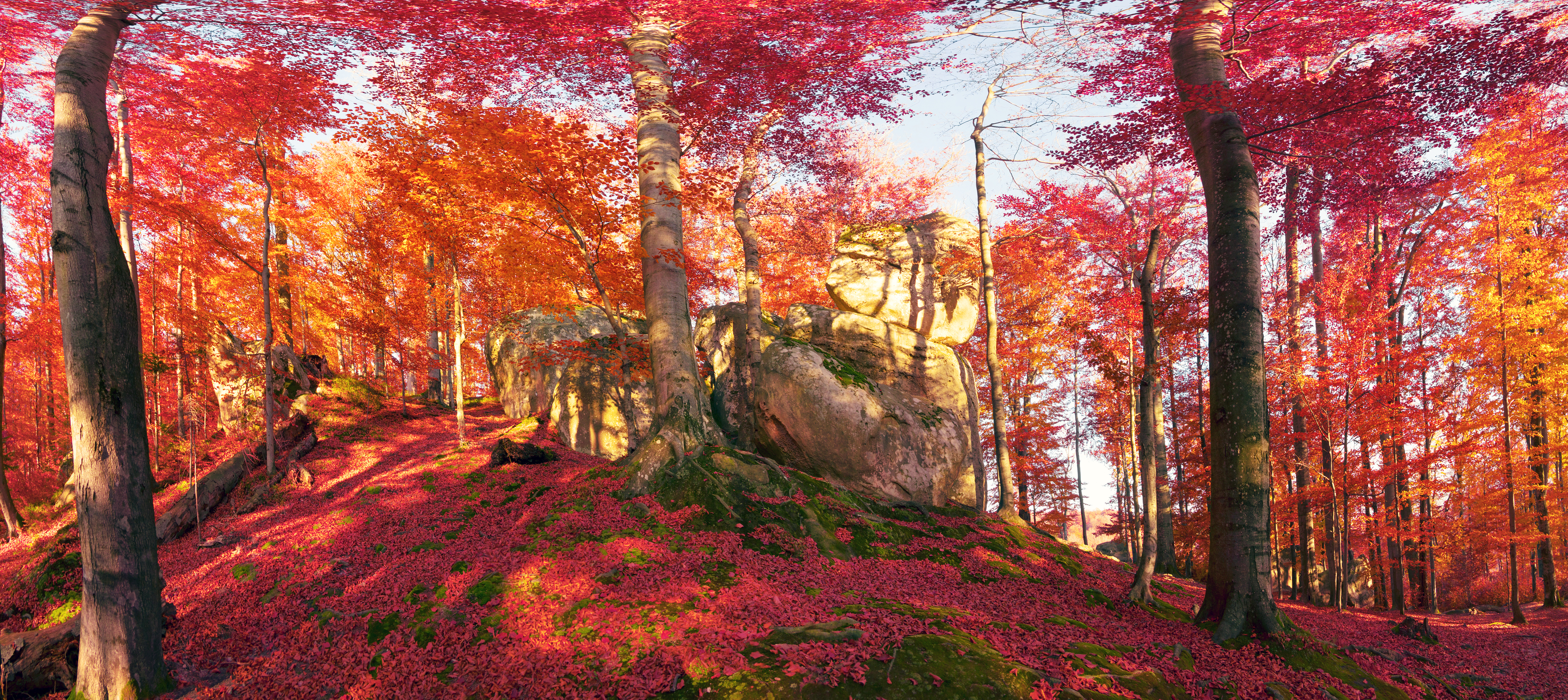 Red Autumn Forest 4k Ultra HD Wallpaper And Background Image