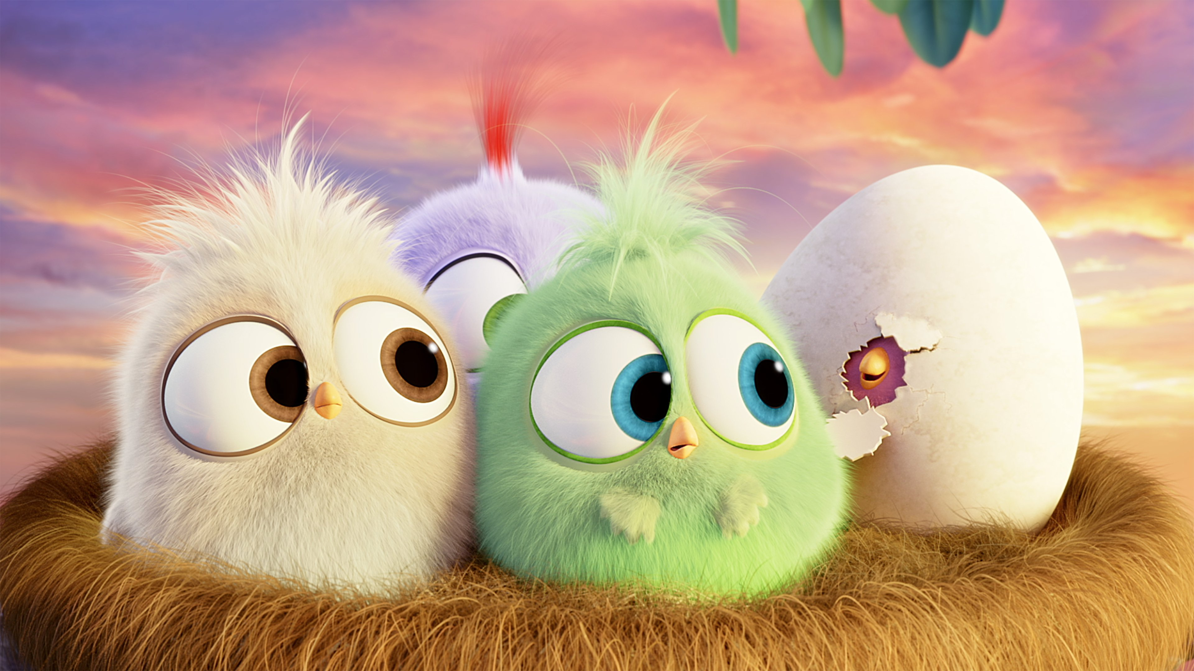 18 The Angry Birds Movie HD Wallpapers